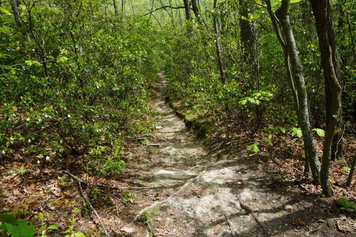 Tory's Den Trail Hanging Rock State Park Danbury, NC