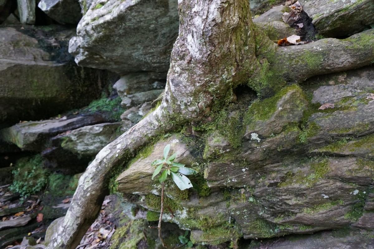 Hidden Falls - surrounding area. Hanging Rock State Park Danbury, NC