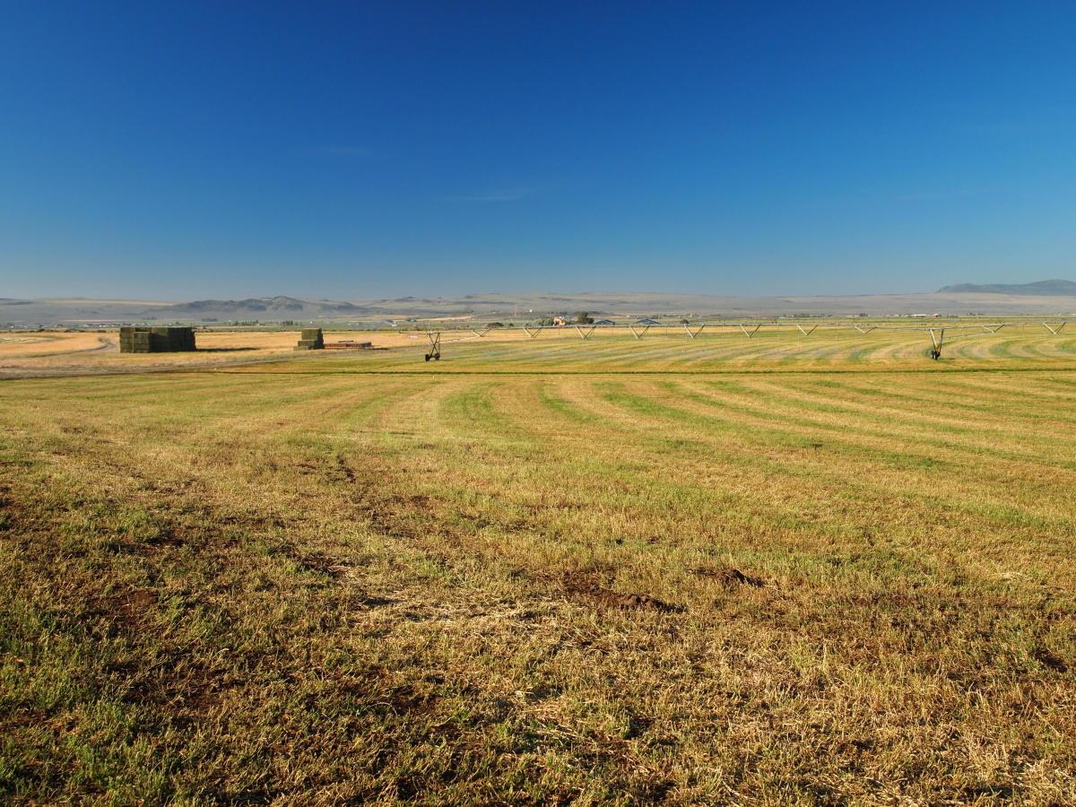 One of many alfalfa pivots in Lake County, Oregon.