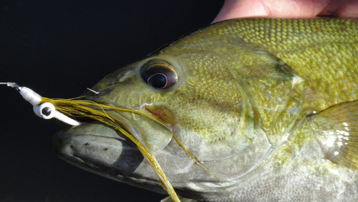 The classic olive/white clouser claims another smallmouth