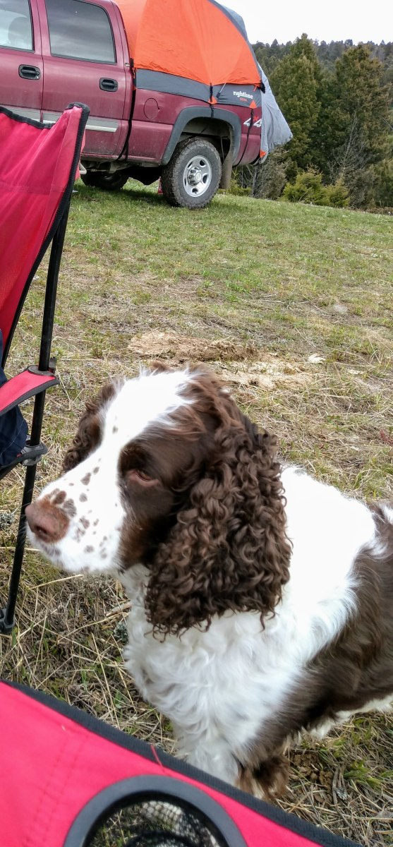 Here is our dishwasher. It's a three year old model from the brand Springer Spaniel. It's extremely portable and as an extra feature, will keep you warm at night. We've found that regular maintenance is required for best performance.