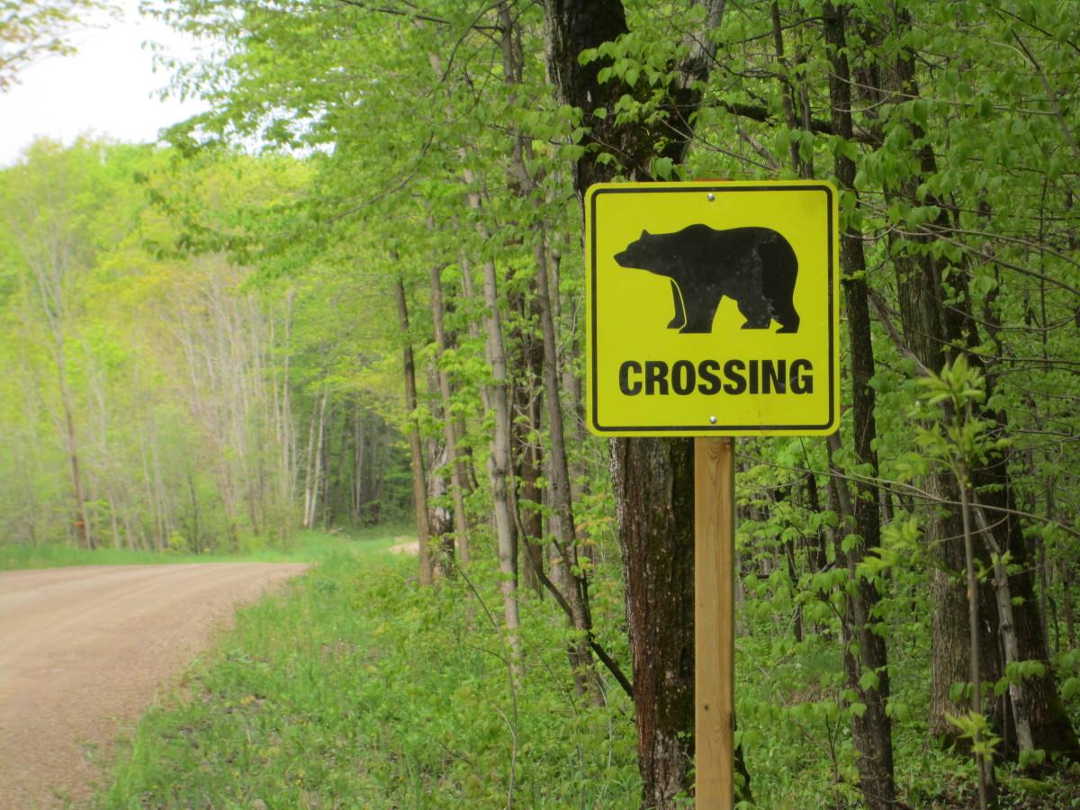 No bear around.