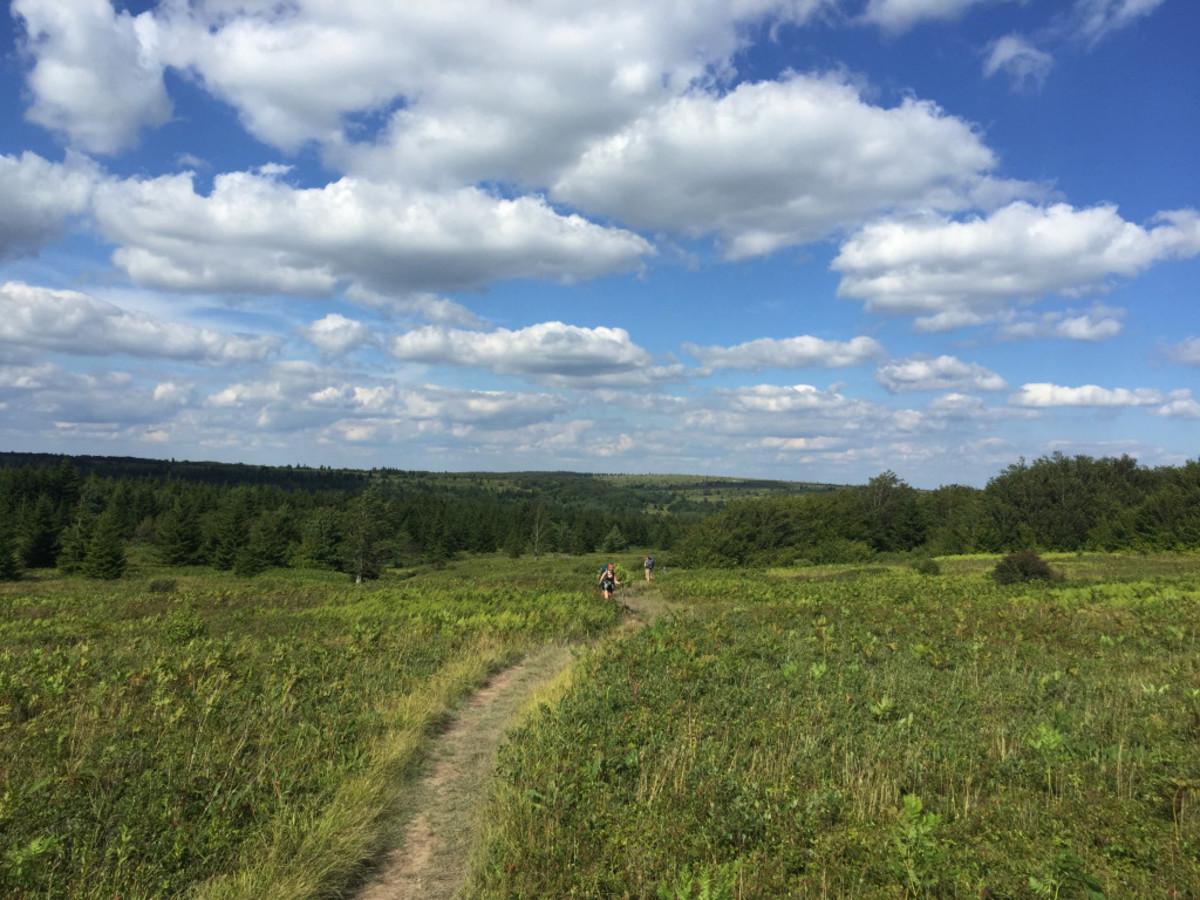 Open Fields on Bear Rocks