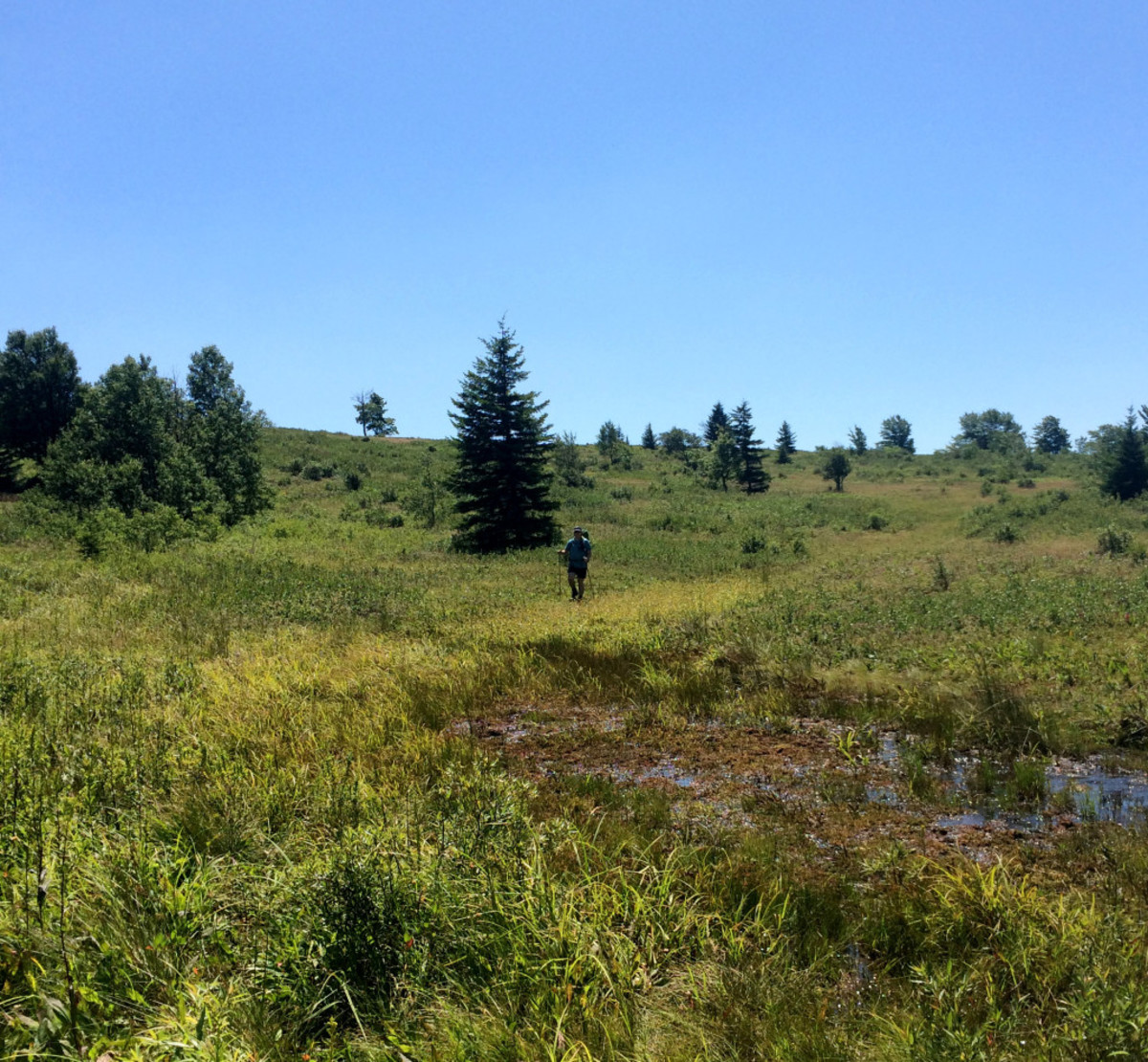My husband, Jamison, in the distance amidst the swampland of Dobbin's Grade. Don't let the grass fool you, it's mostly all boot deep with water at a minimum.