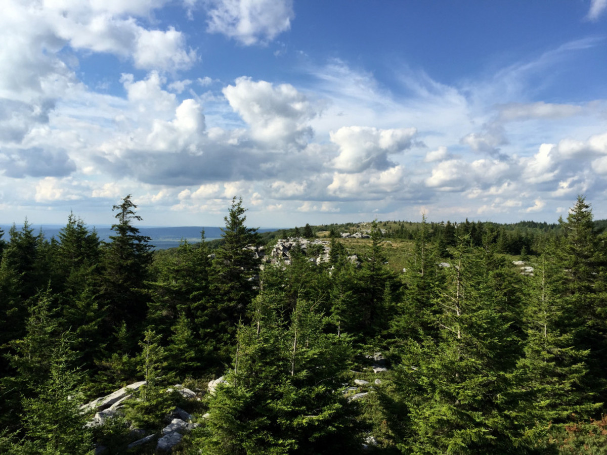 View North from atop a rock on the Rocky Ridge Trail
