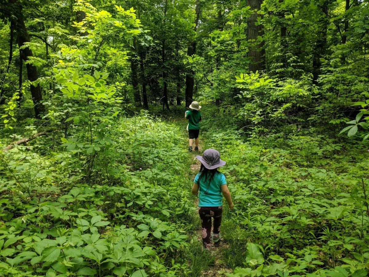 Kids hiking in the woods.