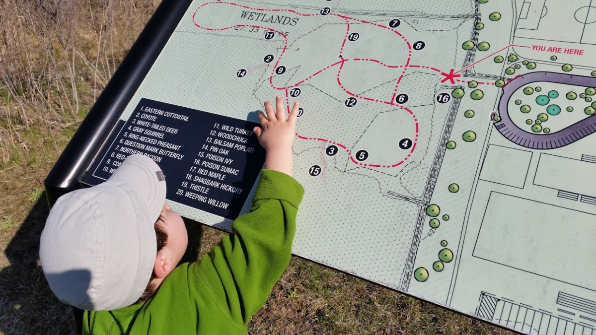 Toddler studying map before hike.