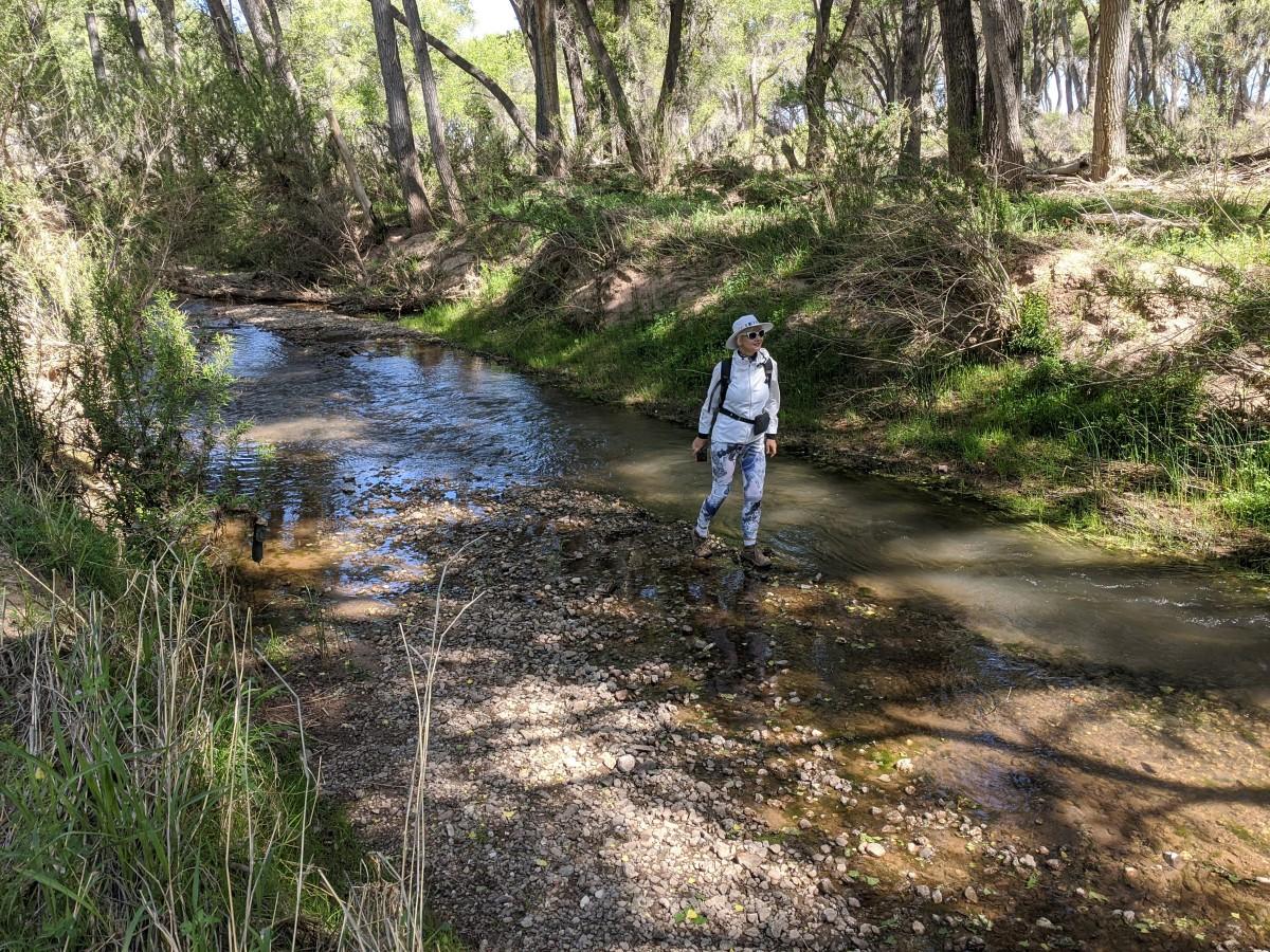 caterpillars-everywhere-as-we-hike-along-the-san-pedro-river