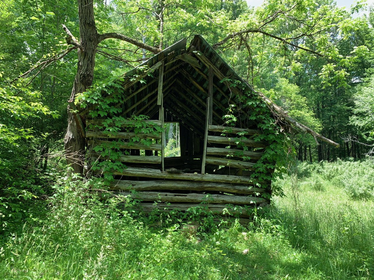The Old Rotted Cabin