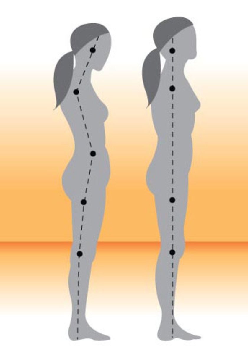 The body should have a slight S-curve along the spine.