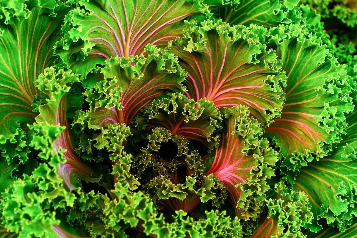 Kale is a good source of folate and other nutrients.