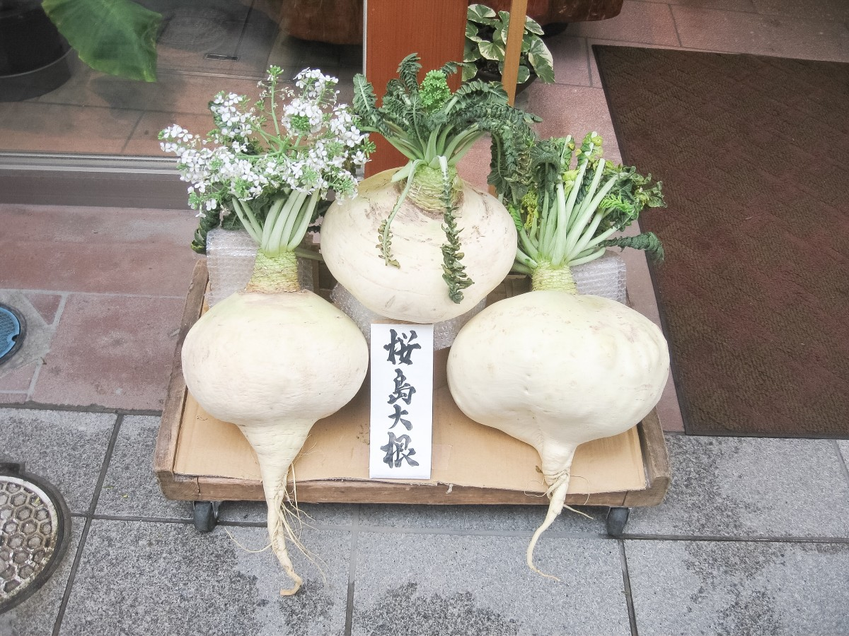 The Sakurajima daikon or radish may become very large and heavy.
