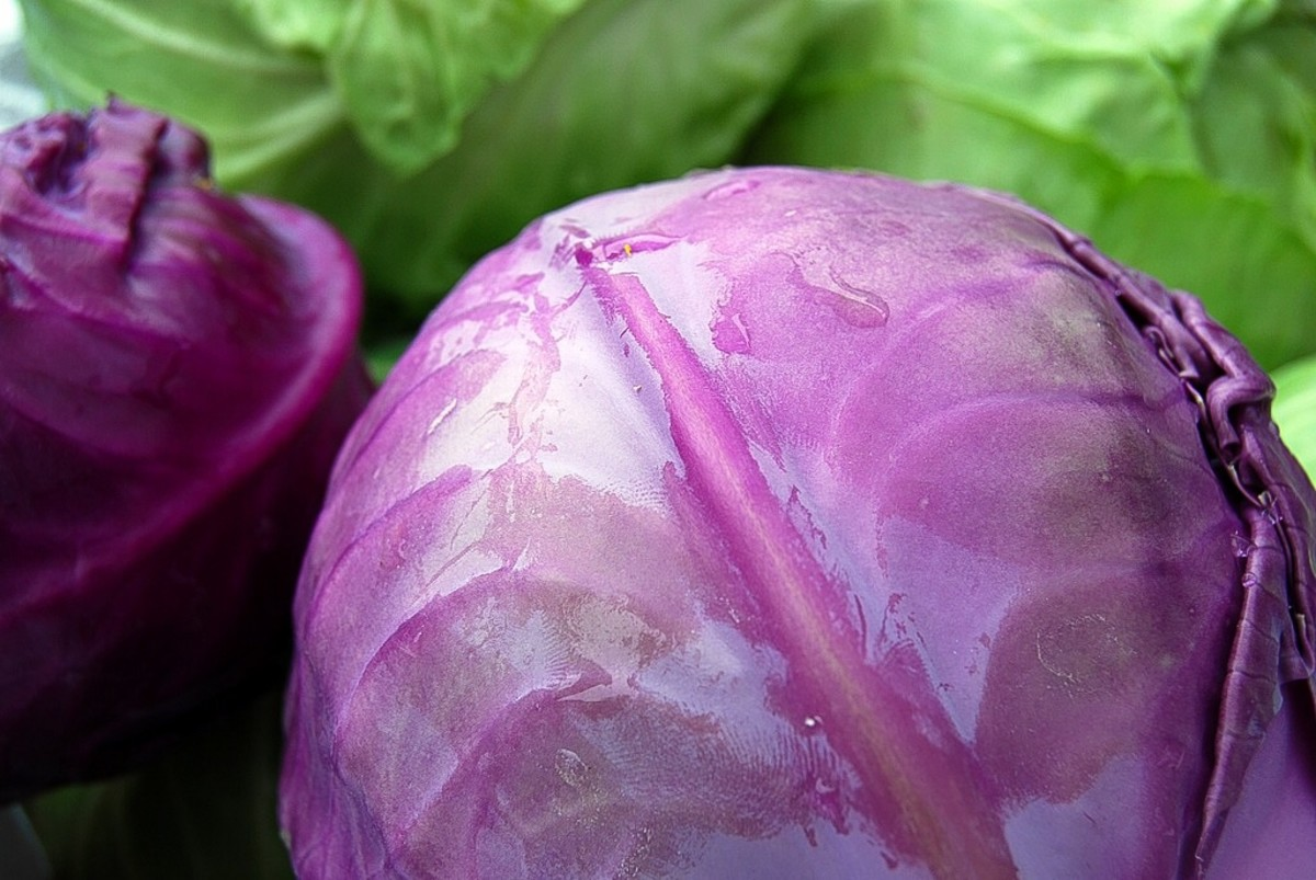 Red and green cabbage