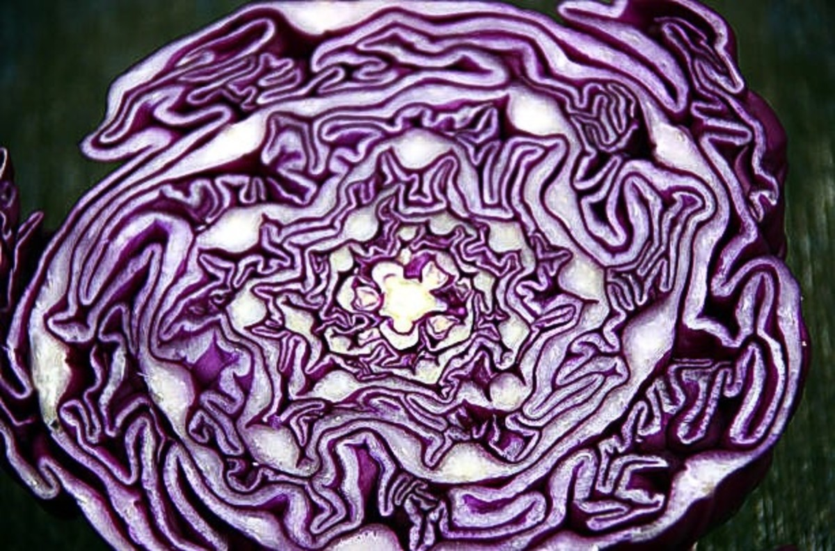 Interesting colour and shapes inside a red cabbage