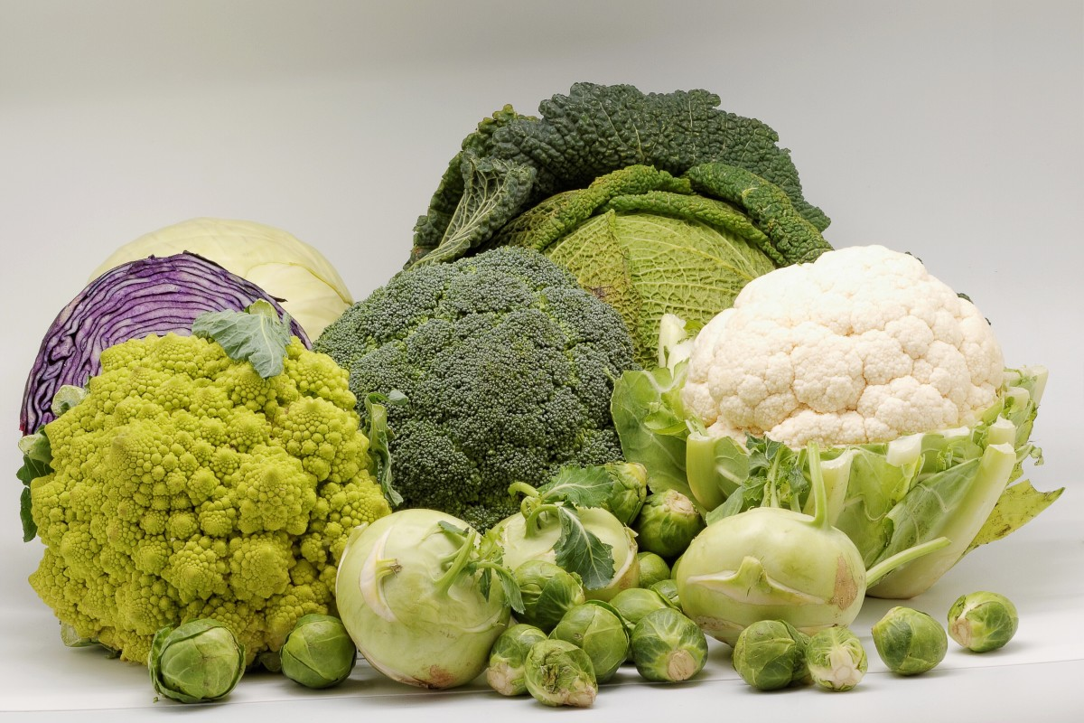 All of the vegetables in this photo have the scientific name Brassica oleracea.