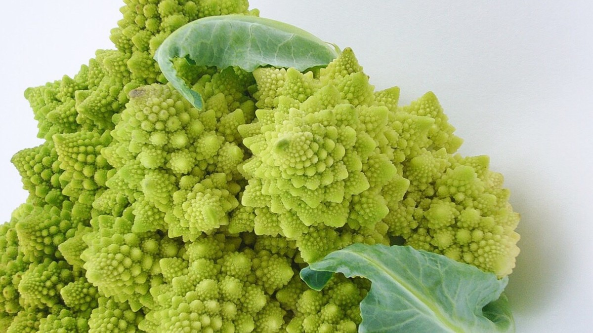 Romanesco broccoli, or Romanesco cauliflower, has a natural fractal design. A fractal has a repeating pattern at all levels of magnification.