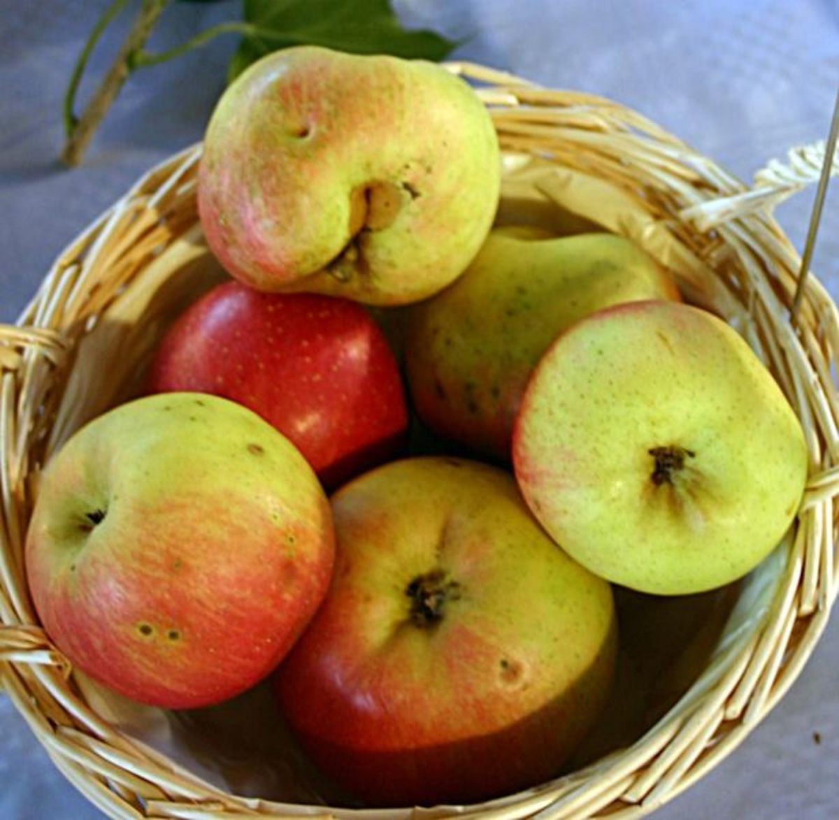 amazing-apples-facts-and-health-benefits
