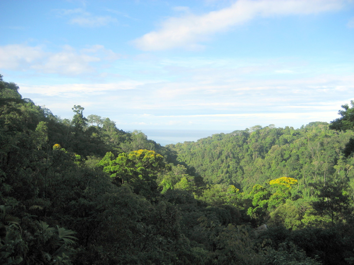 The inspiring view from the open-air yoga studio at Luna Lodge, Carate, Costa Rica.