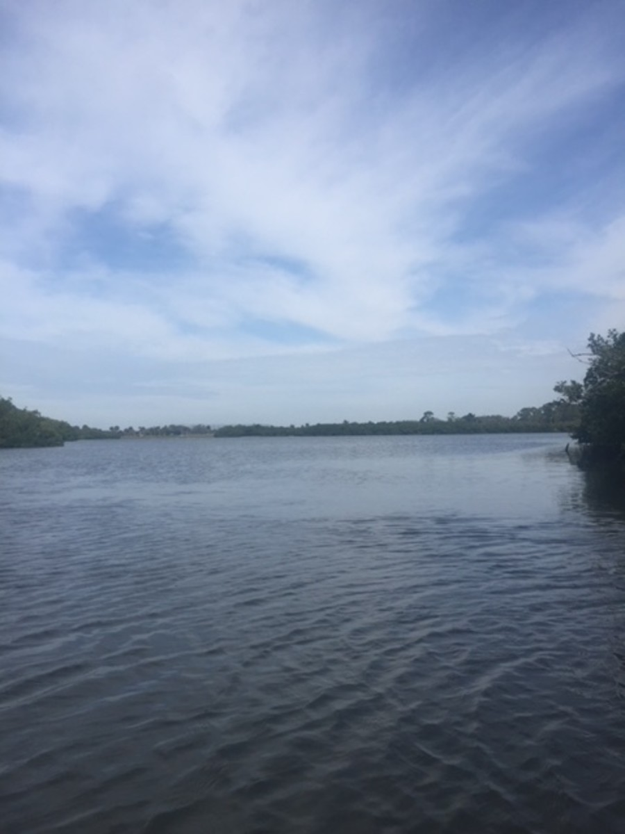 Kayaking in Venice, Florida