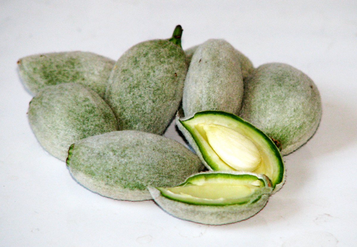 green immature almonds