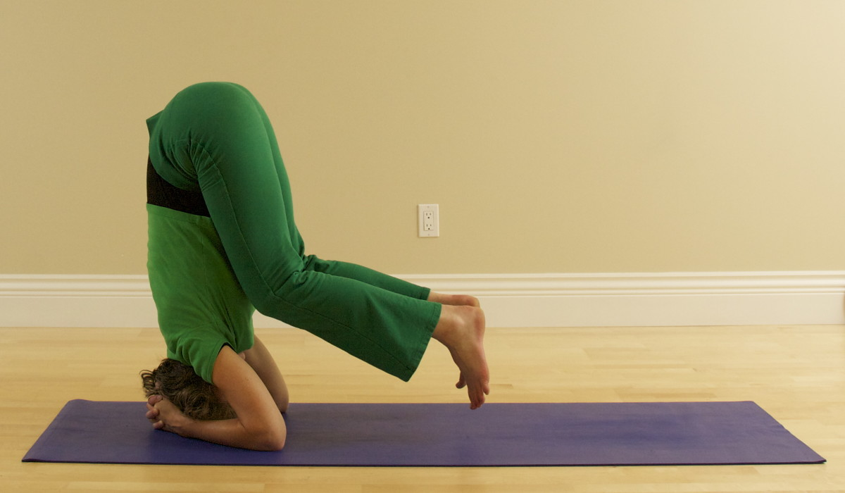 Headstand Sirsana Step 5:  Transfer the weight to the arms.  This is Half Headstand.  If this is enough for you, stop here and then go back into Child Pose.  As you develop strength and confidence, the remaining steps will be easy.