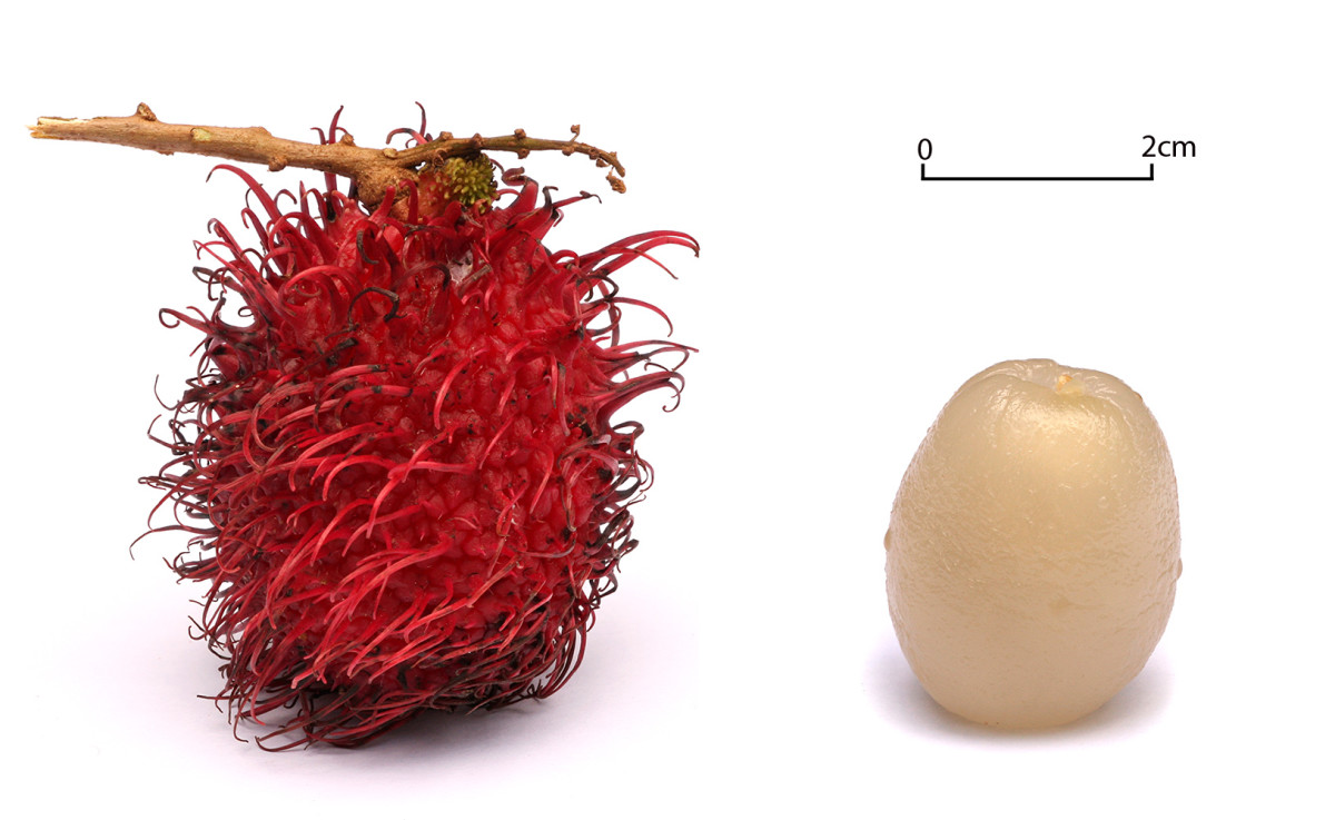 Red Skinned Rambutan