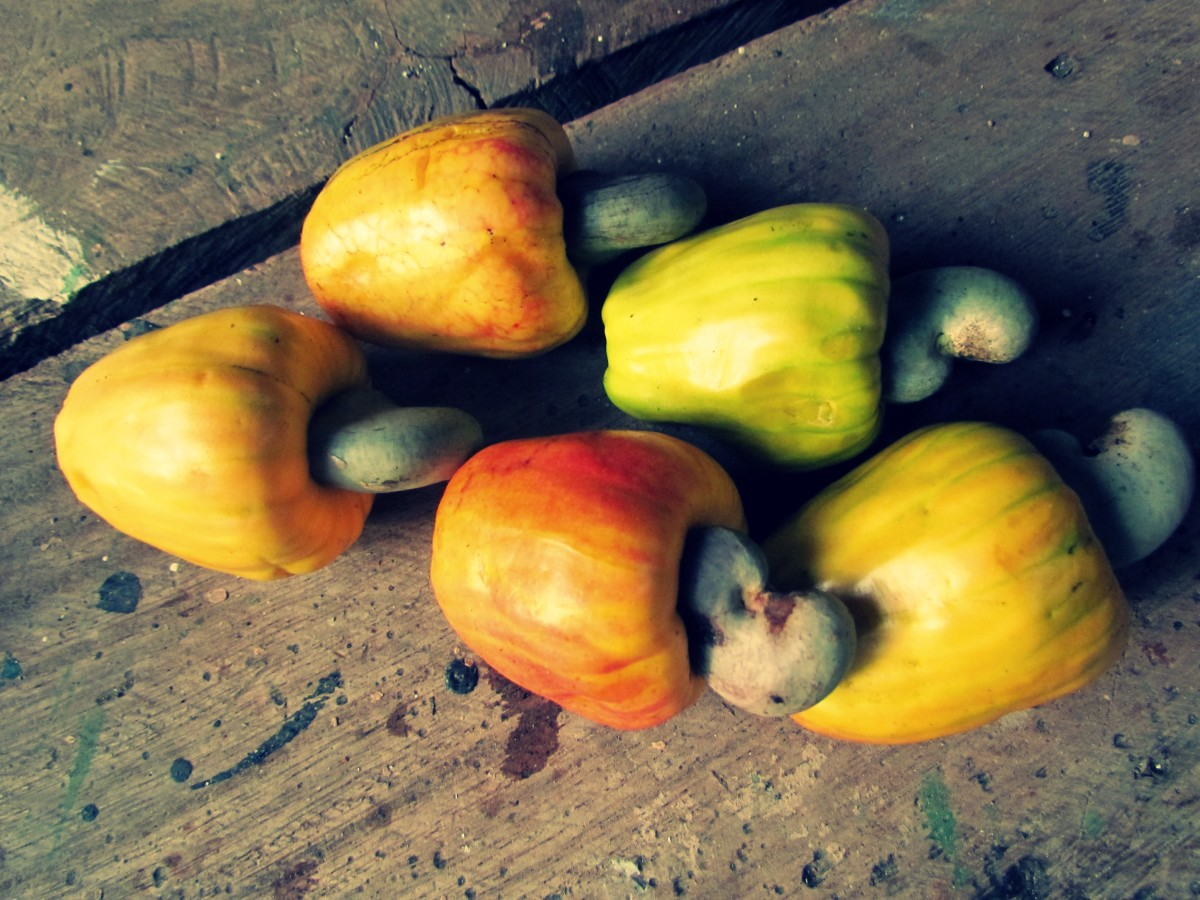 cashew-fruit-of-costa-rica