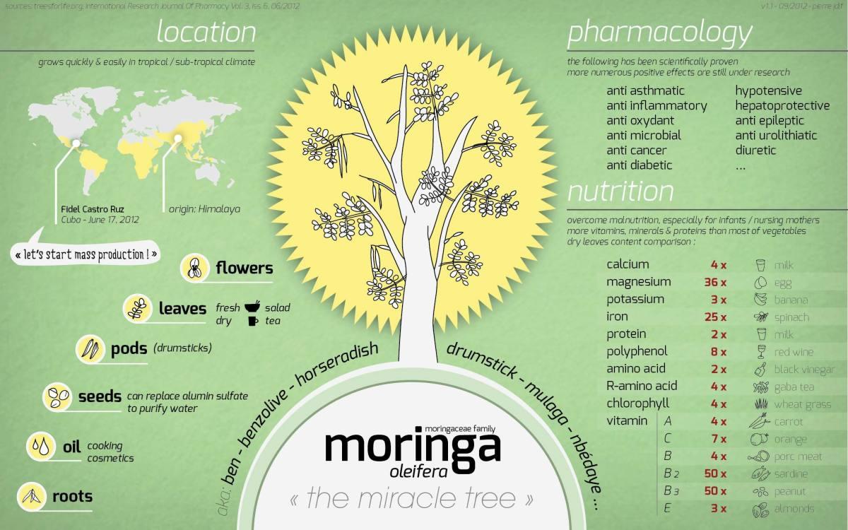 sahjan-or-moringa-oleifera-nutrition-and-health-benefits