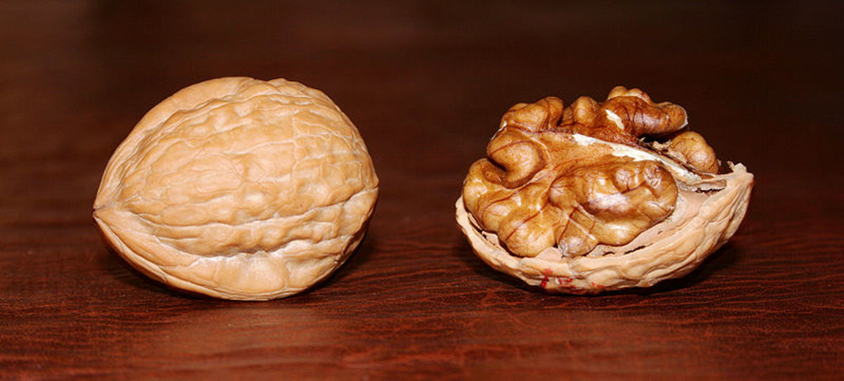 Walnuts are rich in Vitamin B7.