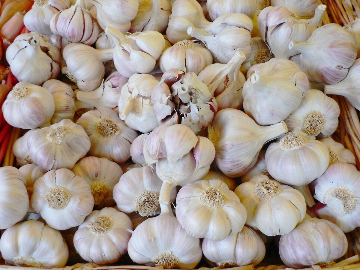 Garlic is another good source of inulin.