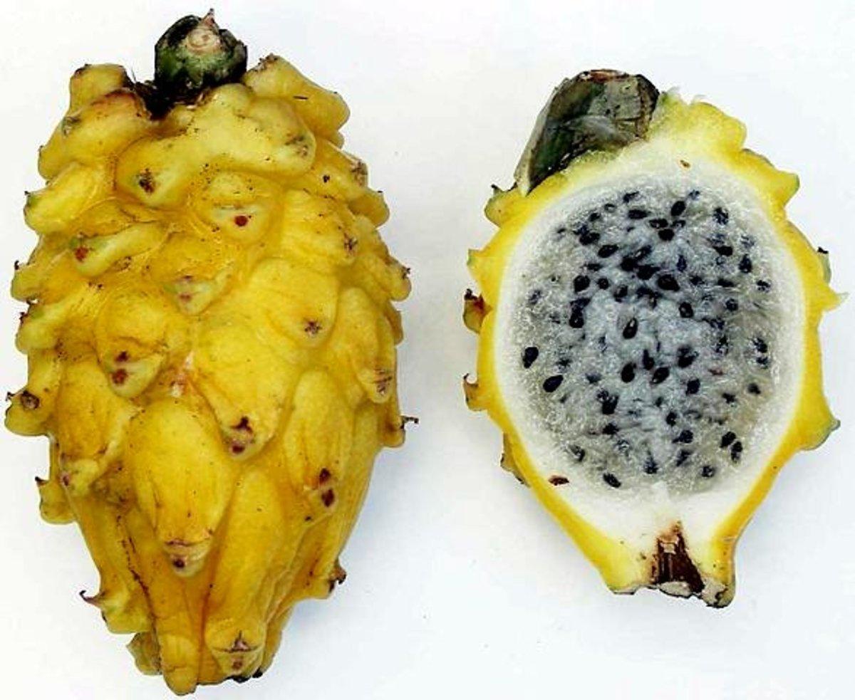 Yellow dragon fruit or Yellow Pitaya with white flesh