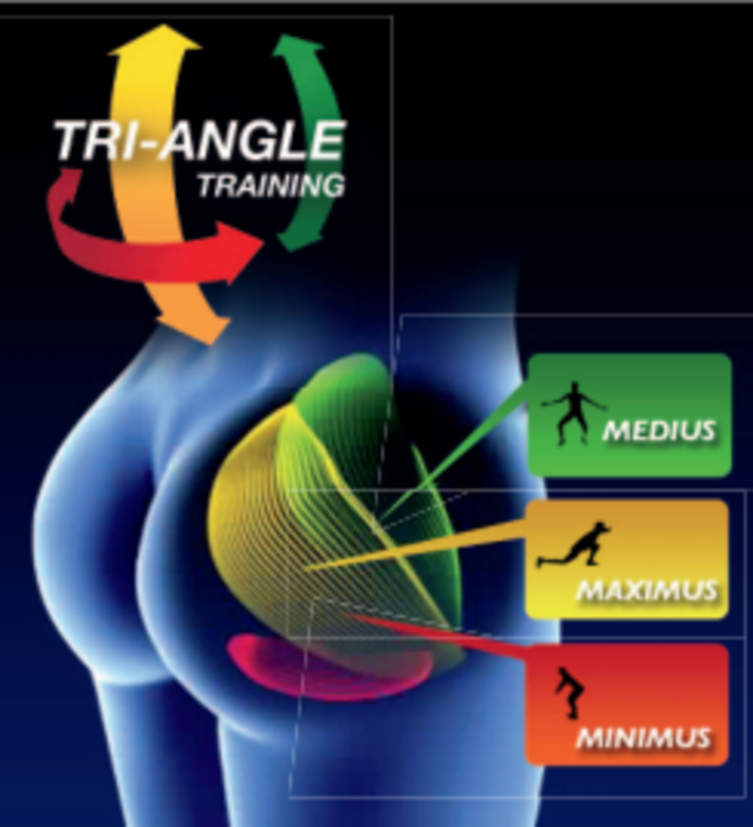 Diagram of Gluteus muscles