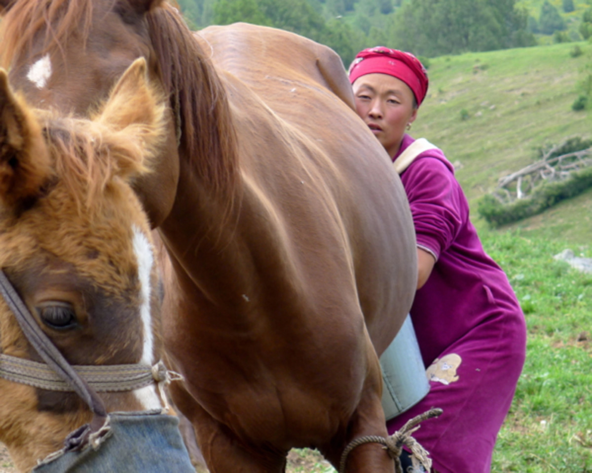 Traditional Bashkir and other Russian nomadic tribes milk, ferment, and produce kumis.