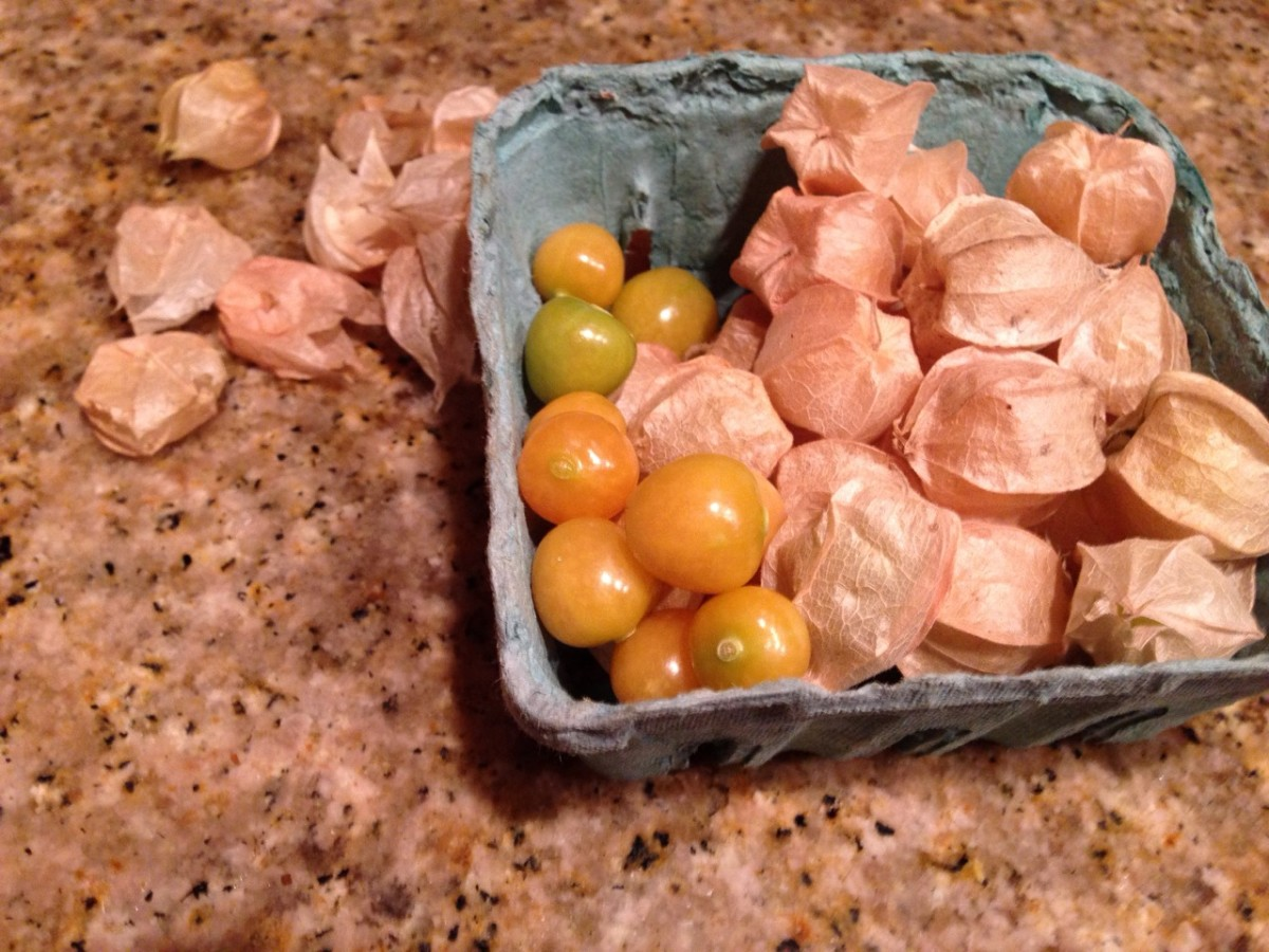 Ground cherries are in the family of tomatillos- just one of the many types of new produce that I tried on the whole30!