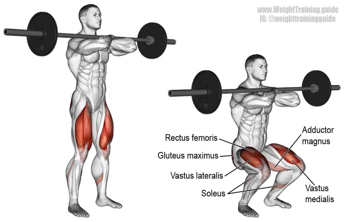 These are the muscles worked in the front squat.