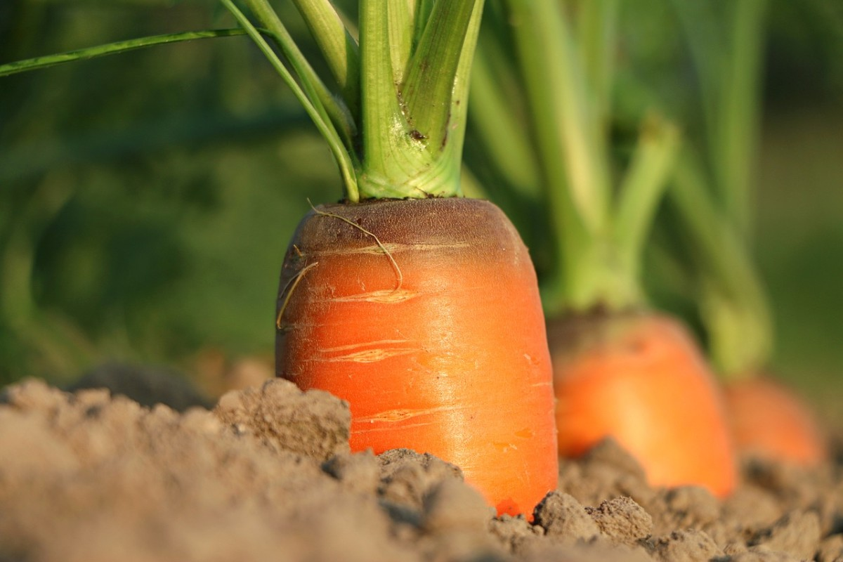 How much cheaper is a nice, juicy carrot per pound than a chunk of meat?
