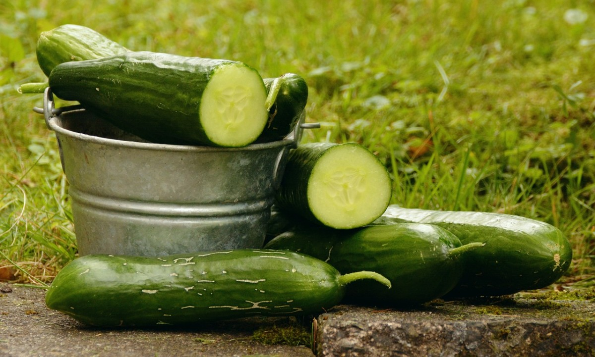 Cucumbers are a good neutral green to add to a too sweet juice mix. They also contain a lot of juice.