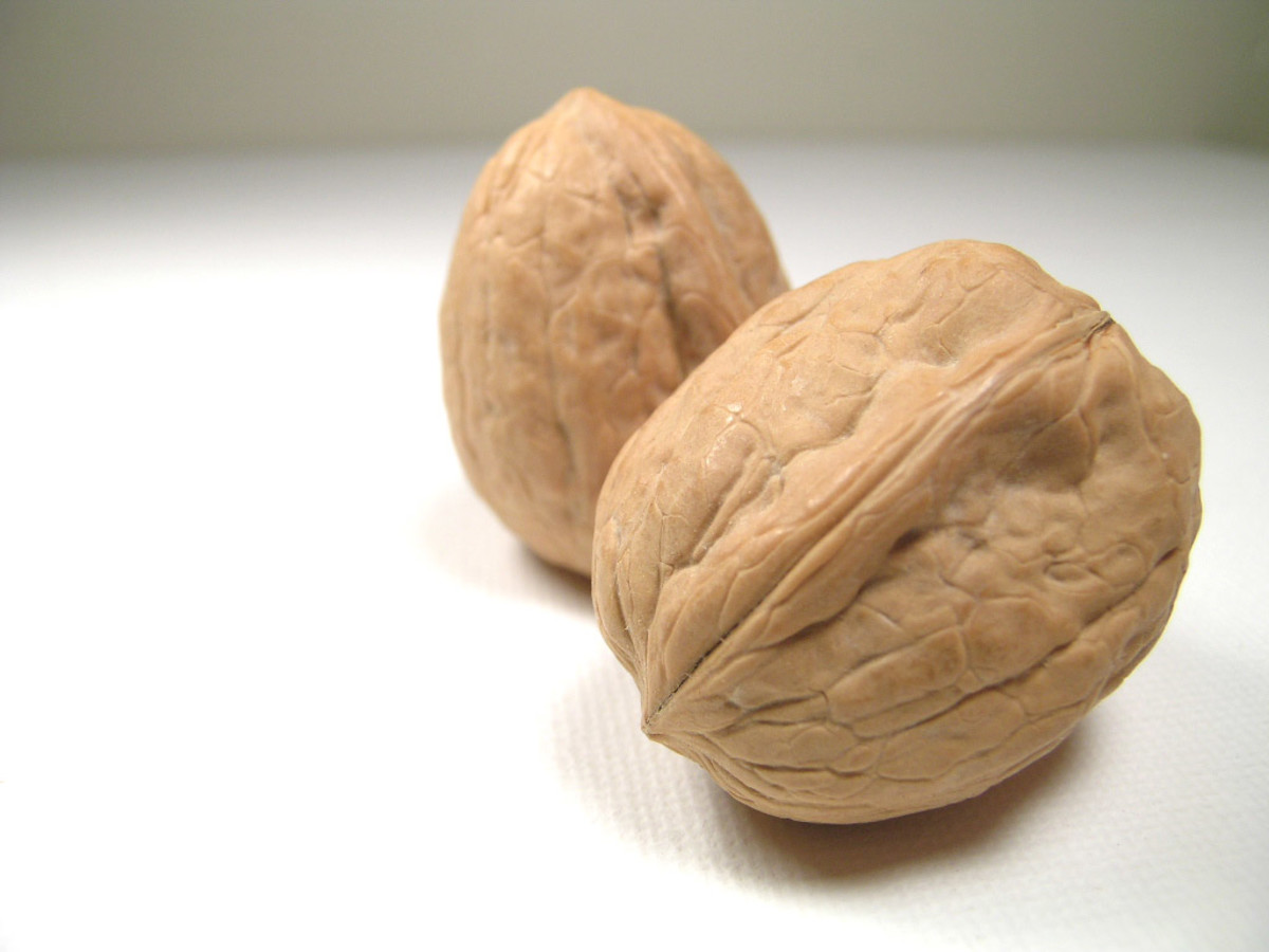 15-brain-foods-to-boost-memory-and-focus