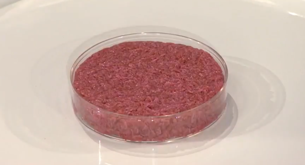 The first cultured meat hamburger ready to be cooked. This will be the future of meat production, where no antibiotics or hormones are used.