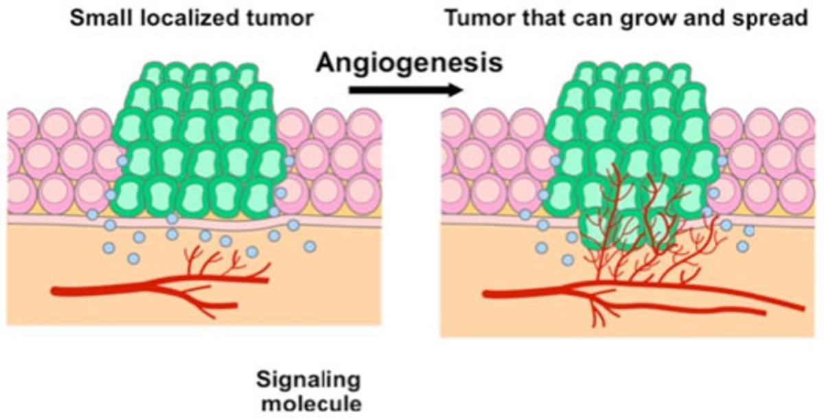 Angiogenesis signaling pathway