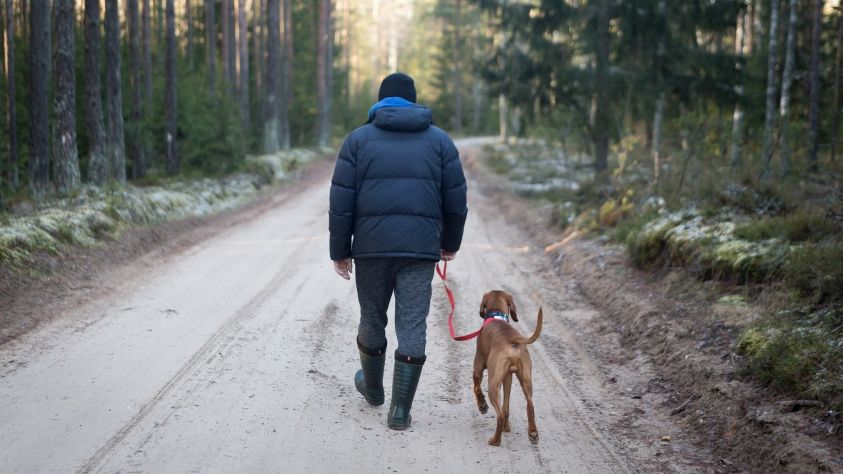 Dogs even see benefits from walking!