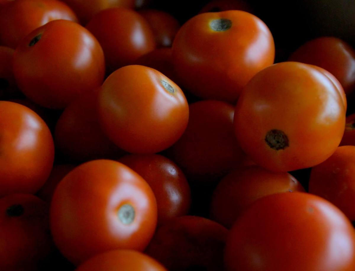 The red color of most tomatoes comes from the antioxidant compound lycopene.