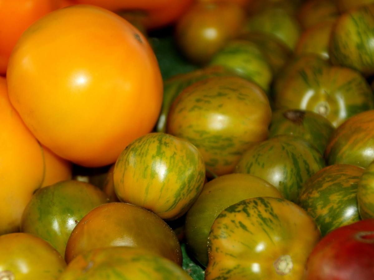 Local farmer's markets are a good place to find different types of tomatoes.
