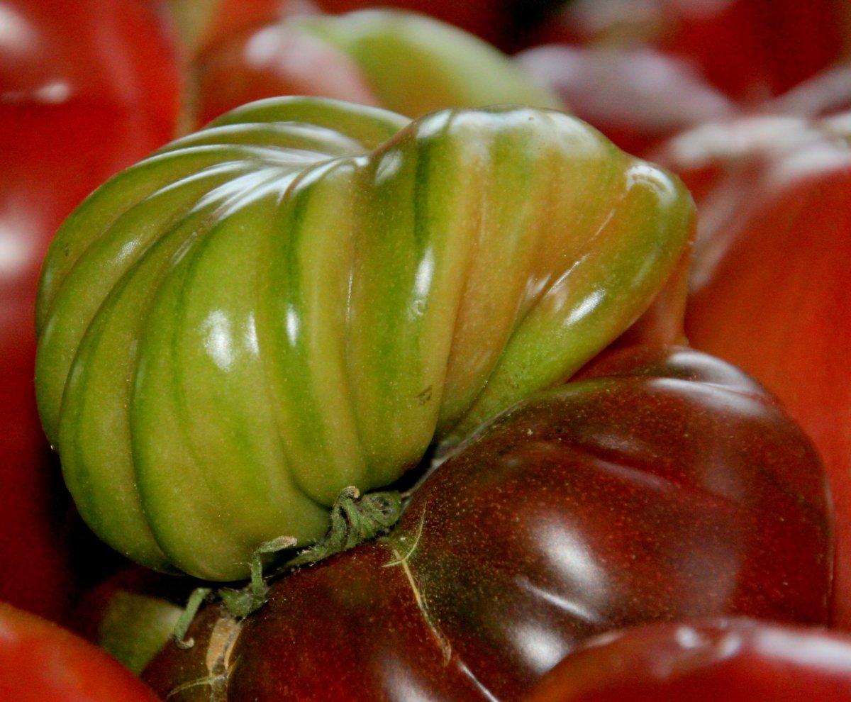 This unusual looking tomato is of the heirloom variety Cherokee Purple.