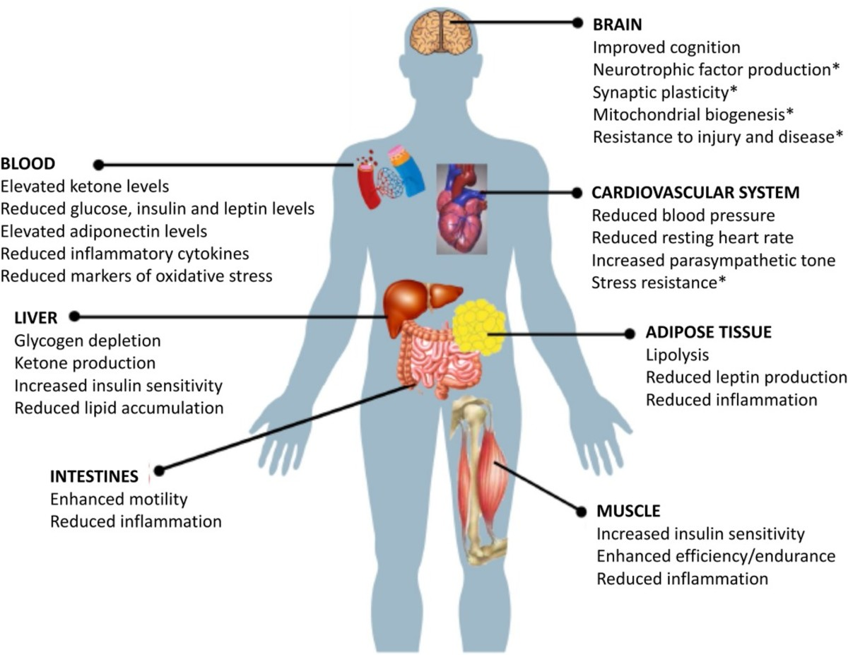 Organ systems that benefit from intermittent fasting.