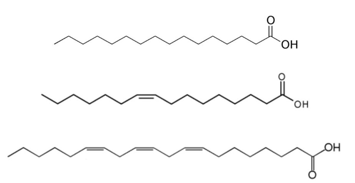 "Figure 5: Structure of a saturated (top), monounsaturated (middle)  and polyunsaturated fatty acid (bottom). Top: ""Palmitic acid structure"" by Edgar181 is in the  public domain. Middle: ""Chemical structure of the 9Z-hexadecenoic acid (palmitoleic aci"