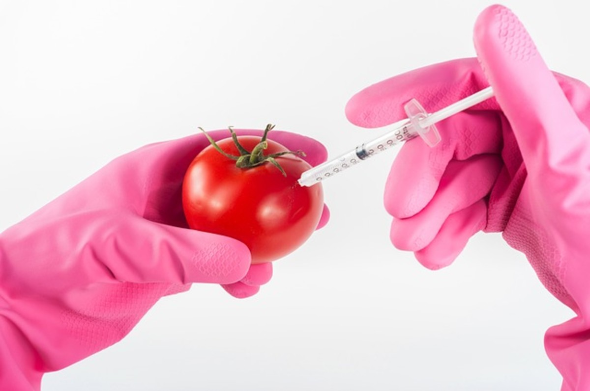 GMO foods have been associated with food allergies, nervous system disorders, and organ damage.