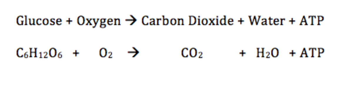The word and chemical equation for respiration.