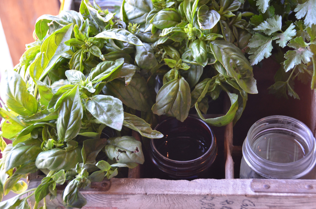 On an Angel diet, you can eat high-vibration foods, such as fresh herbs.