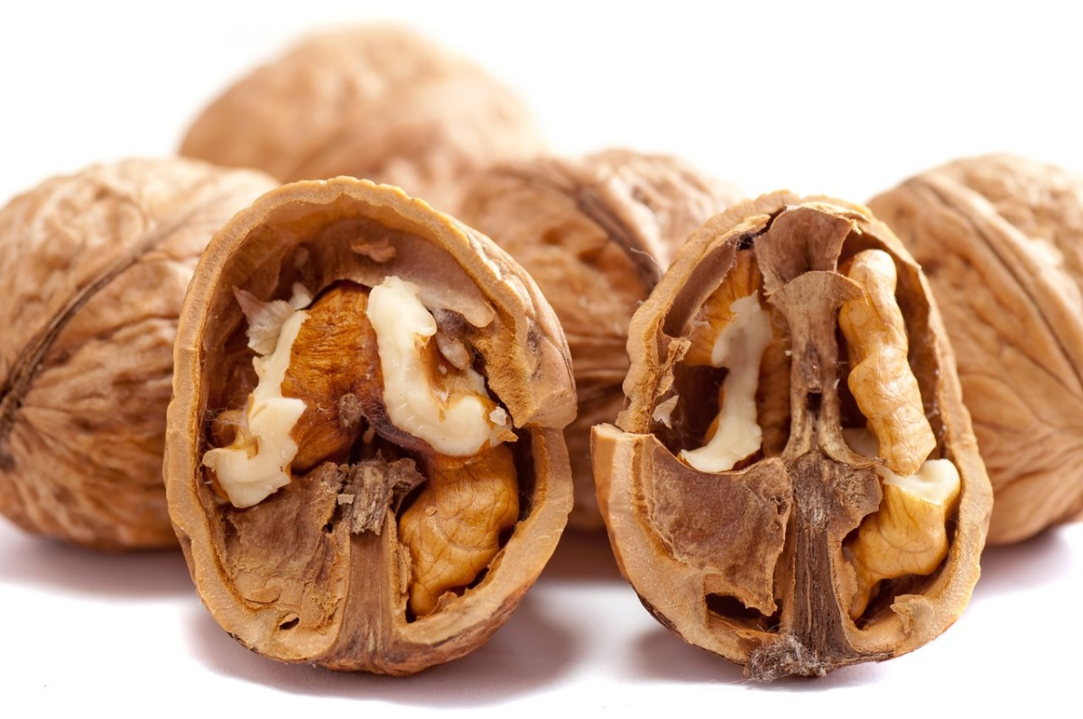 Resembling the brain, walnuts are highly beneficial for brain health.